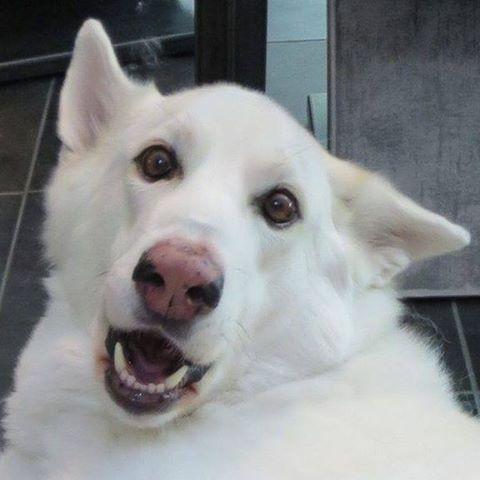 bakufu's avatar