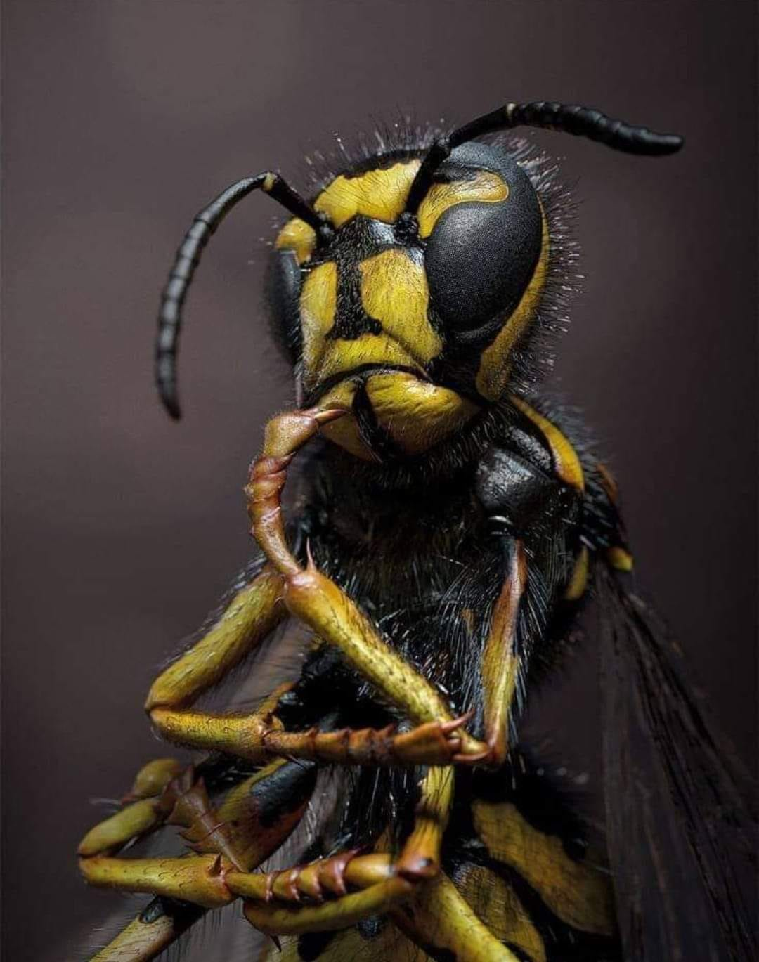 ljohn's avatar