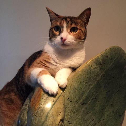 schnabelita's avatar